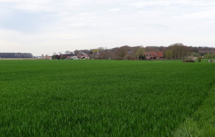Westvleteren Fields