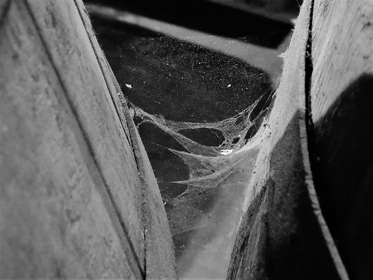 Cantillon Cobwebs