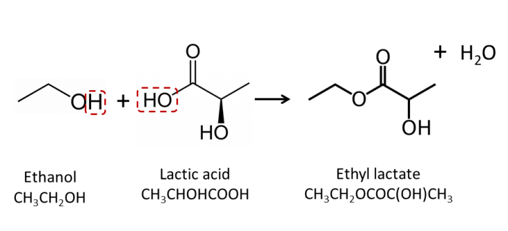 The reaction of lactic acid and ethanol produces the ester, ethyl lactate and water. In the fermentation of sour beers this type of reaction is driven by brettanomyces and responsible for much of the fruity flavors that abound in tart Flanders ales.